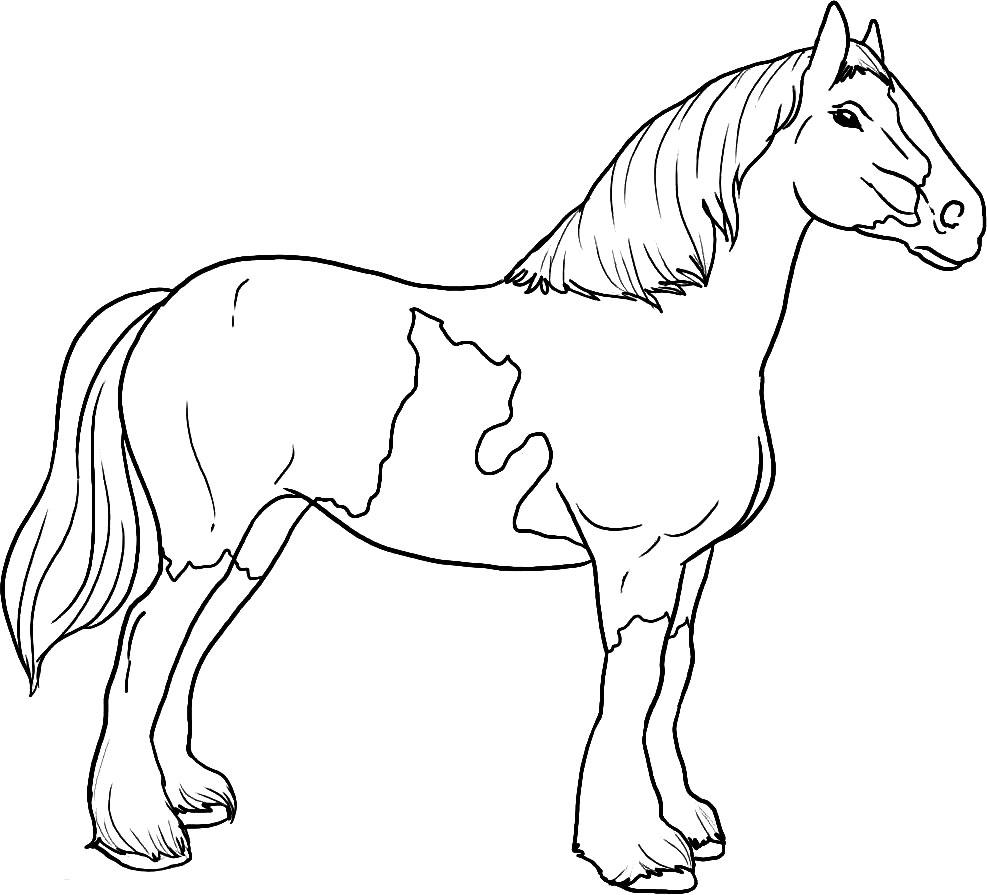 Лошади раскраски детские