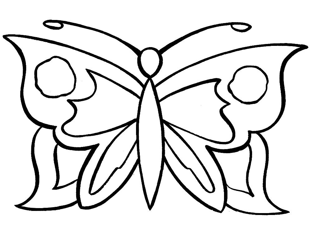 картинки бабочки на цветке карандашом