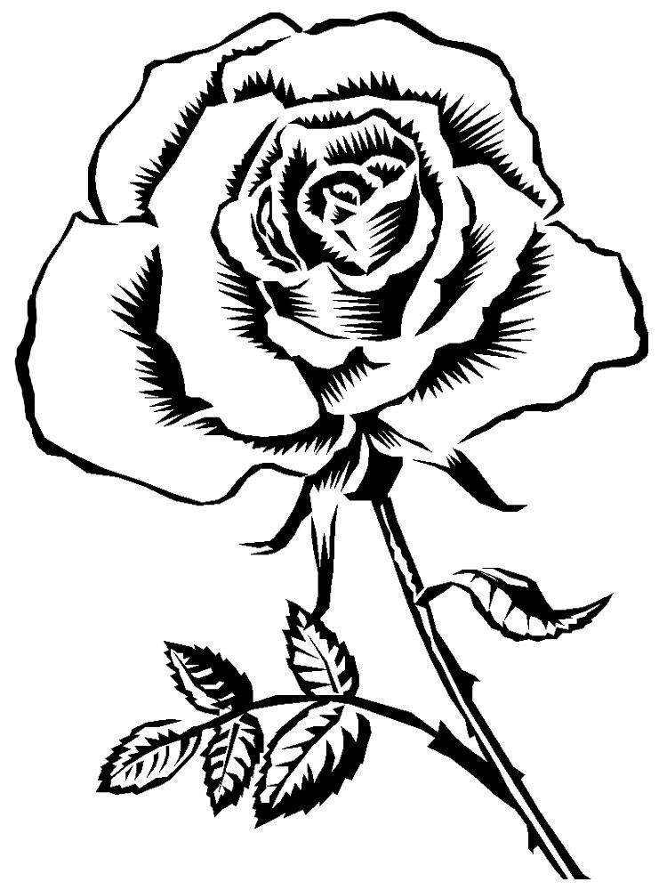 Цветок чёрно белая картинка