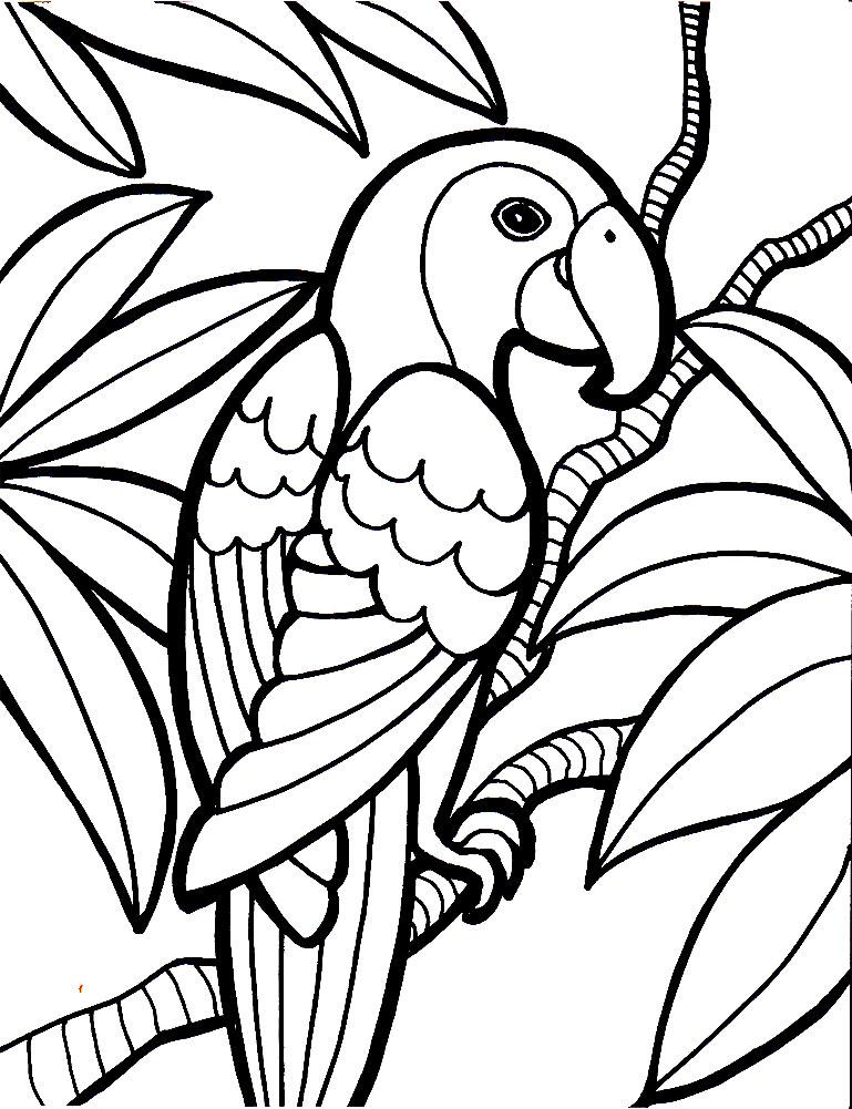 Раскраски птицы скачать и распечатать